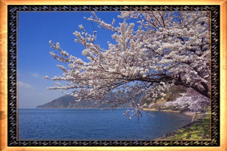 primavera-pronta